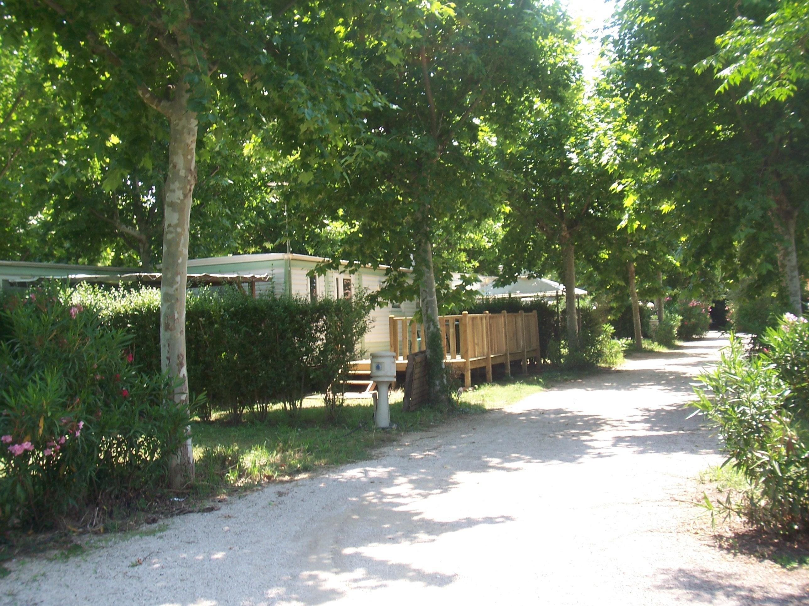 campsite Camping Lou Comtadou CARPENTRAS