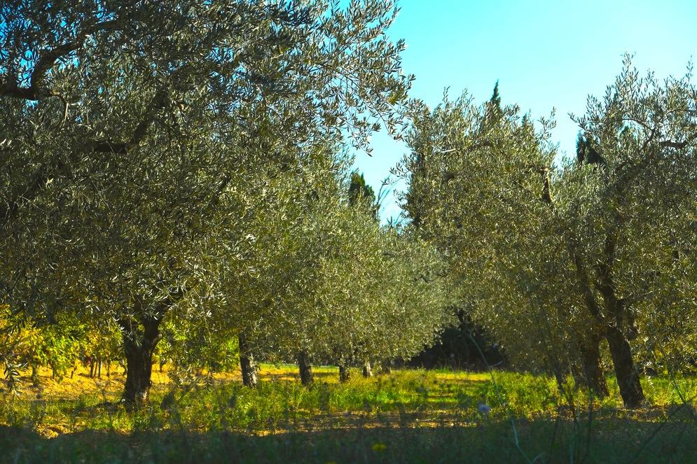 Rond Provence Méditerranée